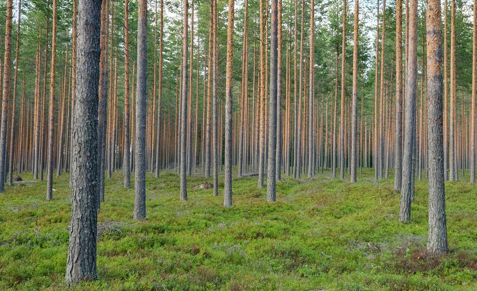 finnharvest-slide_4